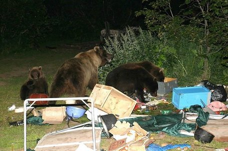 Bears_campsite_medium