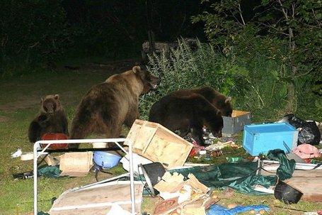 Bears_campsite_medium