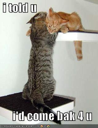 Funny-pictures-cat-has-come-back-for-his-love_medium