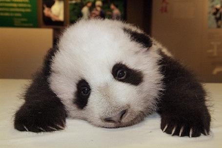 Sad-panda_medium