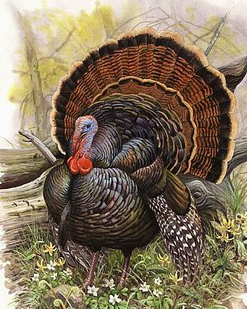 Turkey5_medium