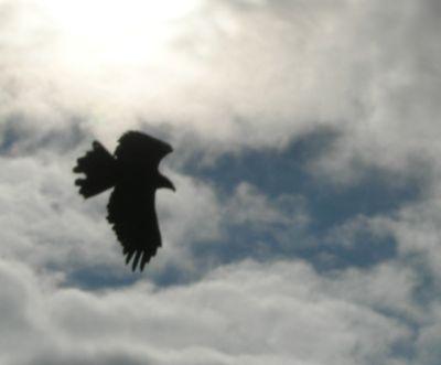 Auburn_can_fly__again_medium