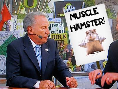 Hamster_medium