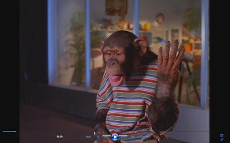 Monkey9_medium