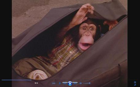 Monkey27_medium