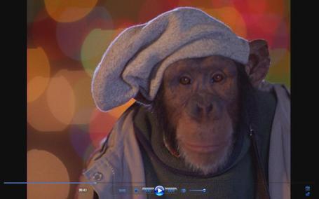 Monkey16_medium