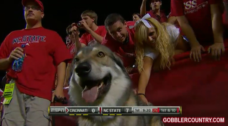Ncsu_tuffy_2_medium