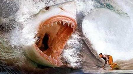 Sharkattack_medium