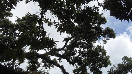Trees_medium