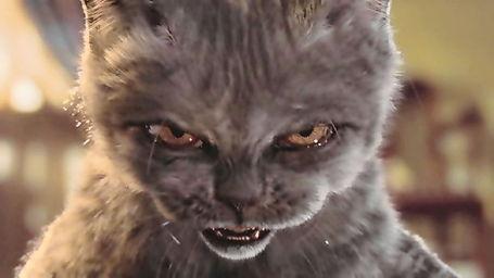 Angry_cat_medium