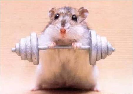 Muscle_hamster_medium