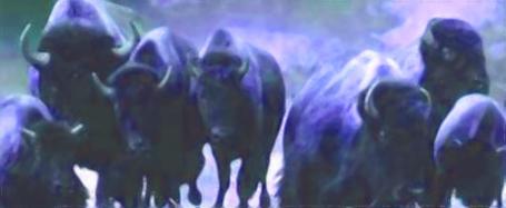 Bullnationstampeede_medium