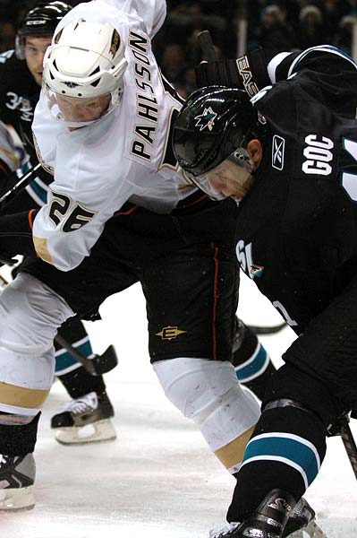 Sharks_ducks11_medium