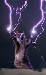 Cat_bolt_medium