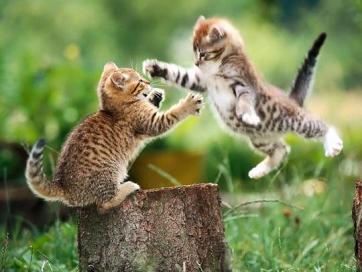 Funny-cat-fight_medium