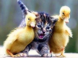 Florida panthers vs anaheim ducks litter box cats