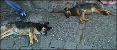 Dogs_sleeping_medium