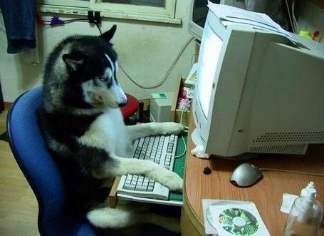 Computerdog_medium