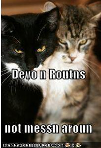 Devorautscats_medium