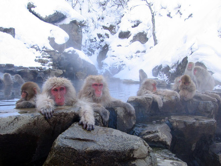 Jigokudani_hotspring_in_nagano_japan_001_medium