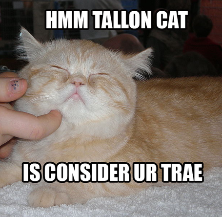 Talloncat_medium