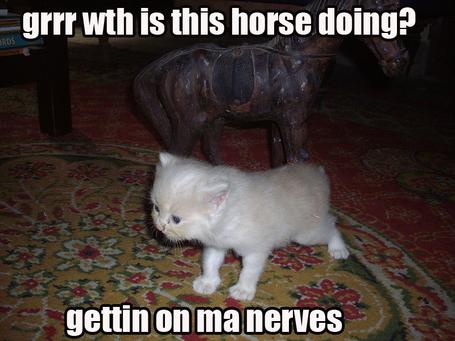 Horses_medium
