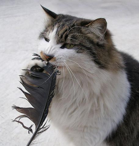 Catbird_medium