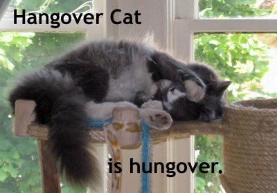 Hangover_cat_medium