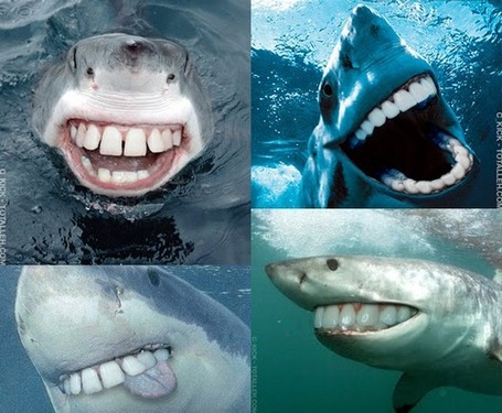 Shark_teeth_medium