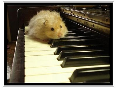 Hamster_on_piano_by_im4ginethem4gic_2__medium
