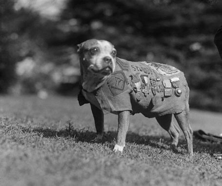 Sergeant_stubby_2_medium