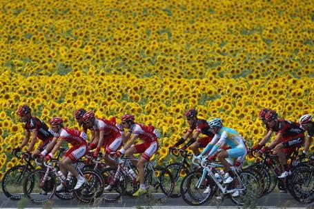 Tour de France 2011, sunflowers. Photo: Michael Steele/Getty.