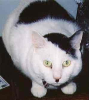 Kitler8_medium