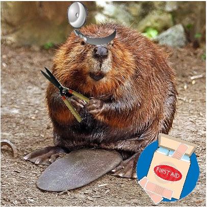 Beaver_medium