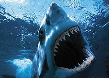 Shark_medium