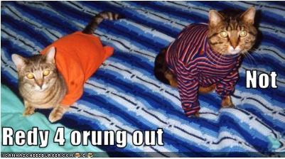 Orangeout2_medium