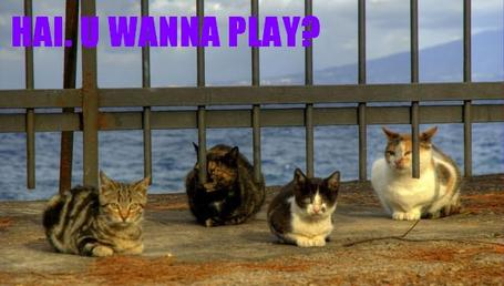 1_cats_want_to_play_medium