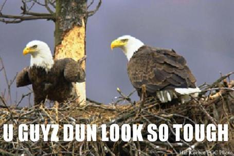 4_eagles_look_tough_medium
