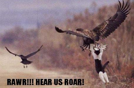 7_funny_picture_of_-bird_attacks_cat_medium