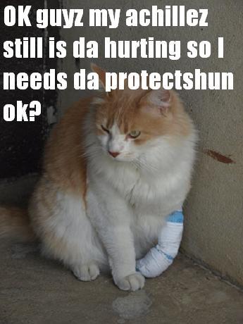 8_persa_bandage_medium