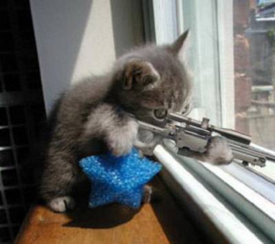 17_kitten_gun_medium
