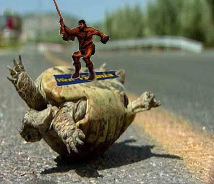 Turtle1_medium