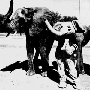 Bigalelephants1991_medium