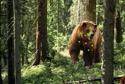 Bearsighting4_medium