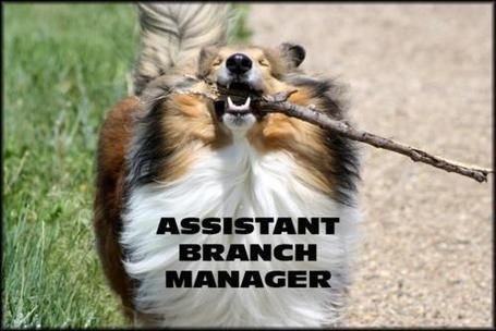 Assisstantbranchmanager_medium
