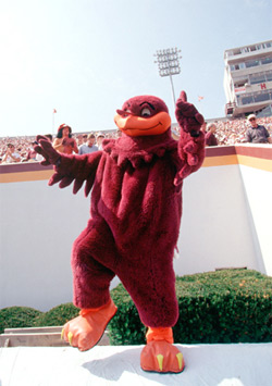 Hokiebird_medium