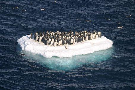 Penguin_island_medium