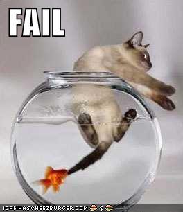 Funny-picture-cat-fail_medium