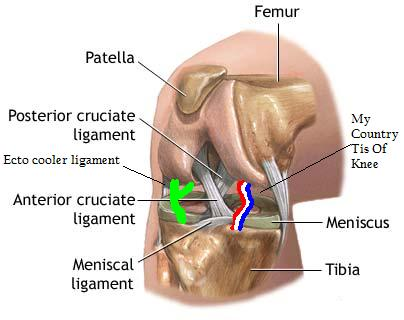 Important-ligaments_medium