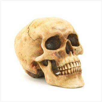 Skull_medium